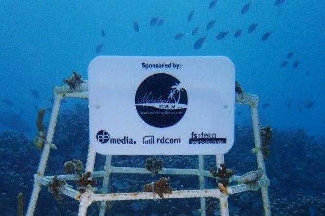 Korallenrahmen Sponsoren