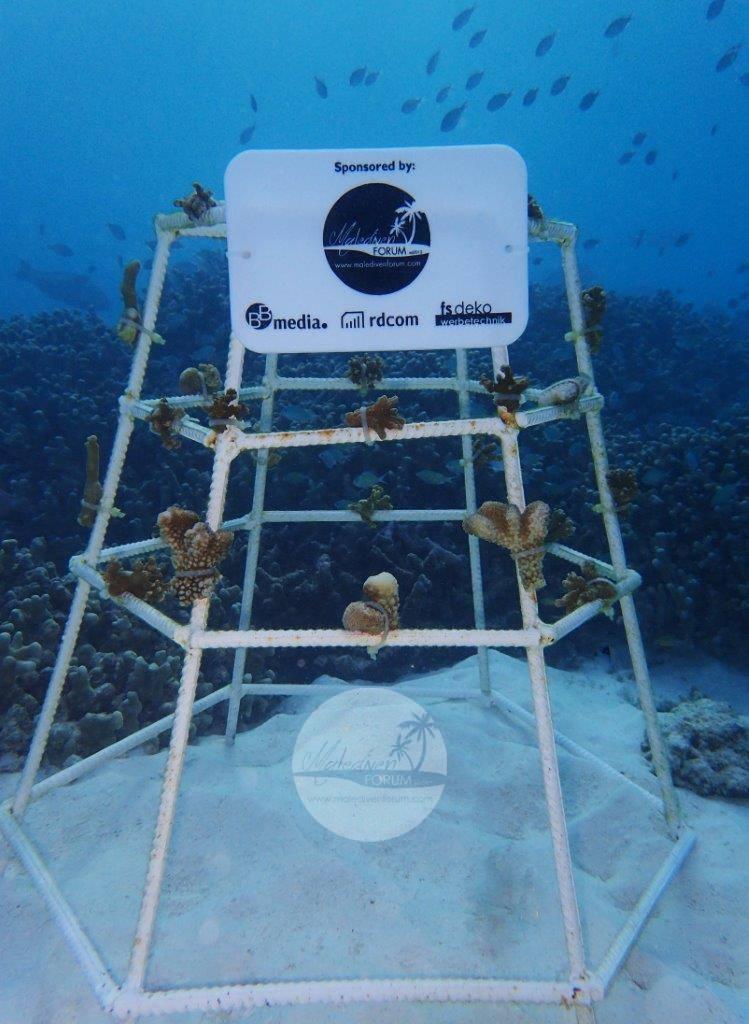 Korallenrahmen 1