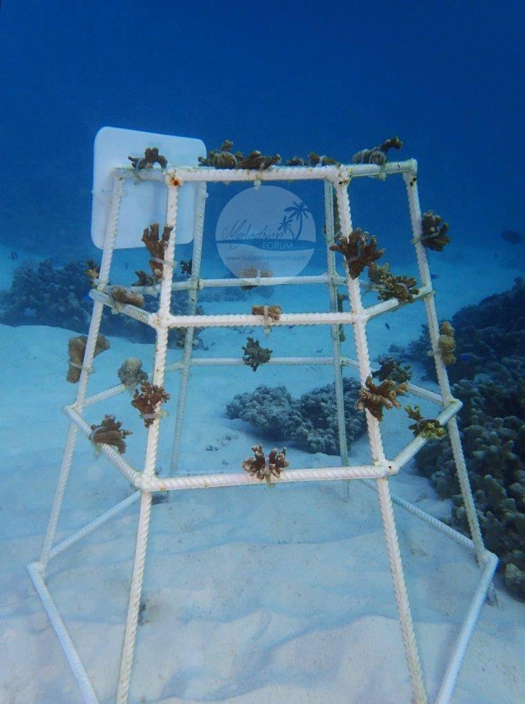 Korallenrahmen 2