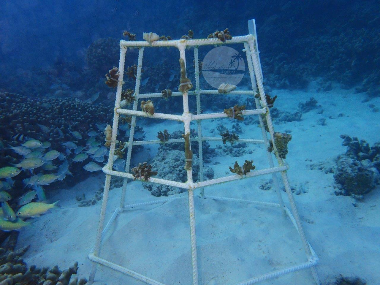 Korallenrahmen 3