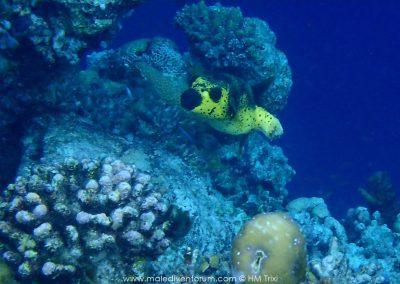 Sun Aqua Vilu Reef Maledives
