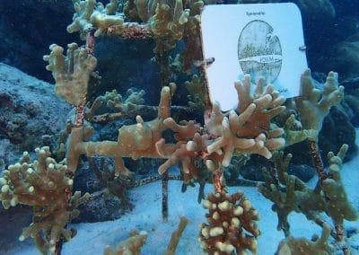 Maledivenforum Korallenrahmen Baros Januar 2018