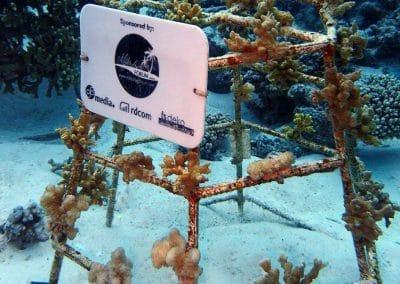 Korallenrahmen Update März 2018
