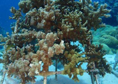 Korallenrahmen Baros Update