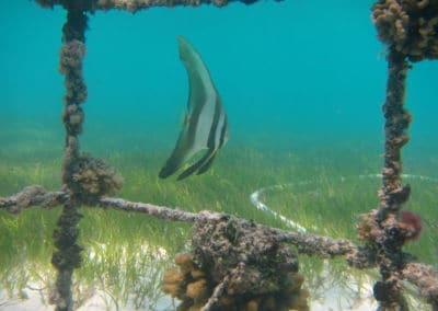 Maledivenforum Coral Park Januar 2020