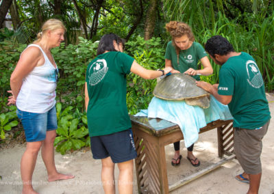 Olive Ridley Project